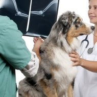 best katy veterinarian