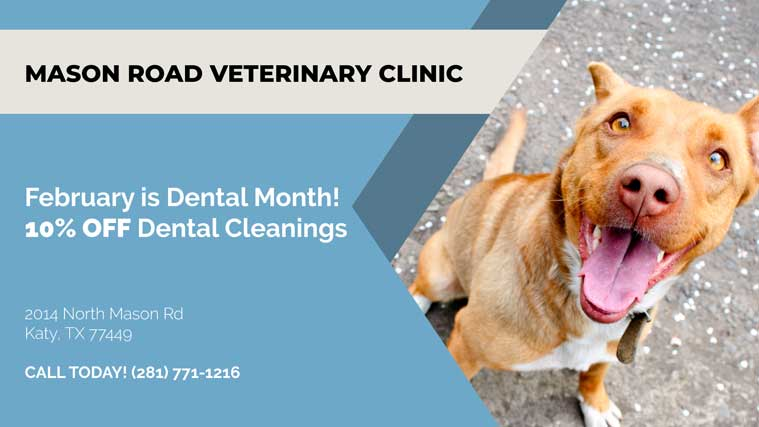 katy vet dental special